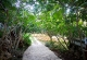 fig-trees-path-day